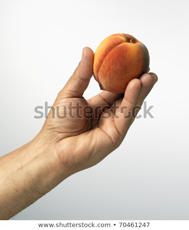 male hand holding peach Stock photo © dolgachov