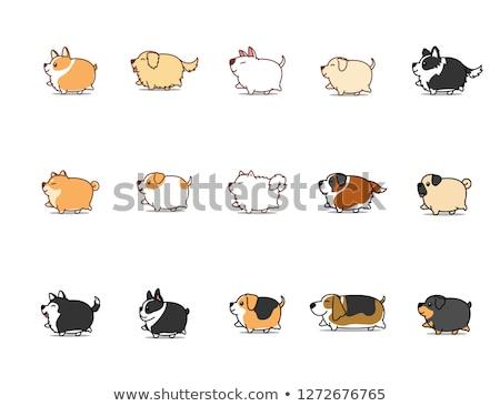 Zdjęcia stock: Cartoon · rottweiler · spaceru · ilustracja · zwierząt · uśmiechnięty