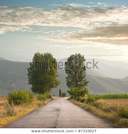 kettő · vidéki · földút · erdő · fű · fa - stock fotó © ruslanshramko