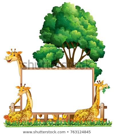 Foto stock: Bordo · plantilla · tres · jirafas · parque · ilustración