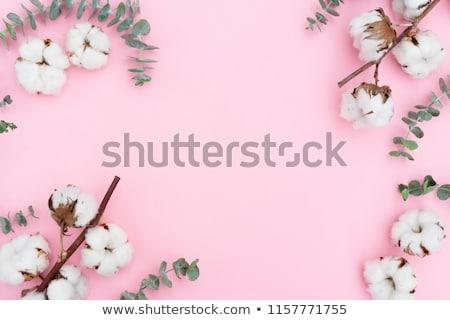 Algodón flores blanco marco rosa espacio de la copia Foto stock © neirfy