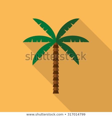 Hurma ağacı vektör yeşil yaprak tropikal kum plaj Stok fotoğraf © pikepicture
