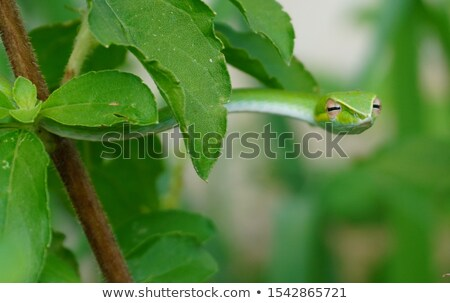 Vert serpent jardin illustration nature Photo stock © colematt