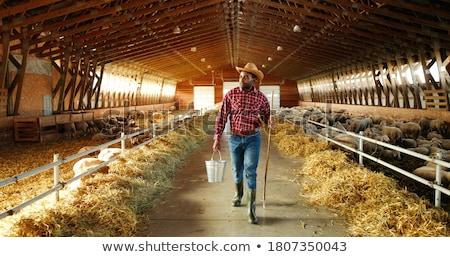 農家 納屋 実例 草 作業 鶏 ストックフォト © colematt