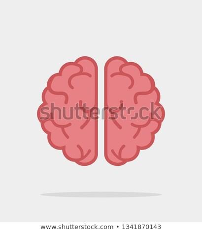 Brain flat icon Stock photo © smoki