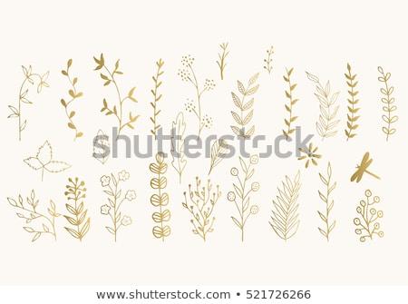 Vetor conjunto ouro folhas silhuetas árvore Foto stock © Pravokrugulnik