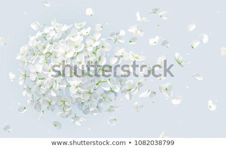 Zuiverheid tederheid afbeelding cute meisje witte bloem Stockfoto © pressmaster
