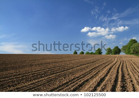 Tree in plowed fields Stock photo © njaj
