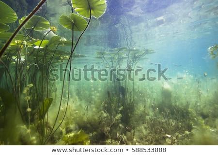 impressionante · folha · verde · reflexões · espelho · isolado · branco - foto stock © franky242