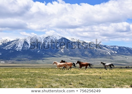 mountain landscape with horses stock photo © kotenko