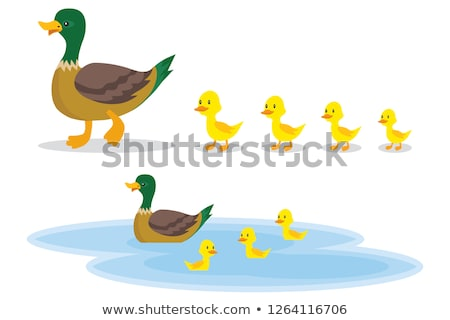 a small duck on a leaf stock photo © michaklootwijk
