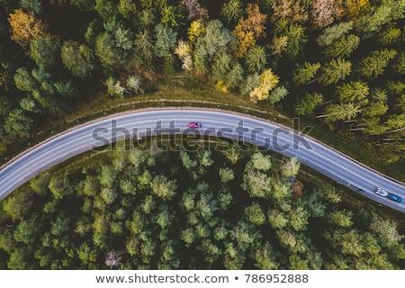 drogowego · lasu · Błękitne · niebo · niebo · drzewo - zdjęcia stock © ifeelstock