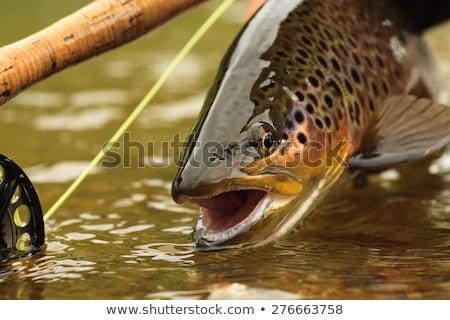Volée pêcheur pêche truite poissons tige Photo stock © patrimonio