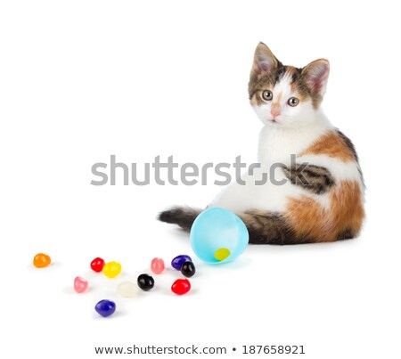 Cute calico kitten sitting next to spilled jelly beans on a whit Stock photo © gabes1976