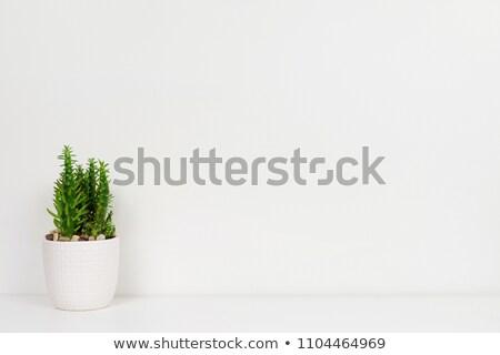 белый керамической глина банка украшение шельфа Сток-фото © yanukit