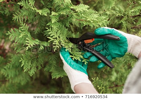 close up of hands trimming grass with clippers stock photo © juniart