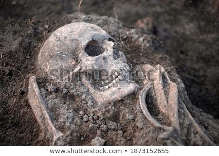 ancient human skull bone and skeleton stock photo © ia_64