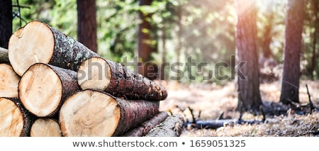 Harvested wood in the forest Stock photo © artfotoss