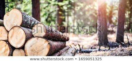 yakacak · odun · çam · orman · yangın · doğa - stok fotoğraf © artfotoss