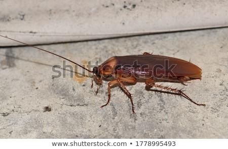Hamamböceği örnek aile arka plan hayat sınıf Stok fotoğraf © bluering