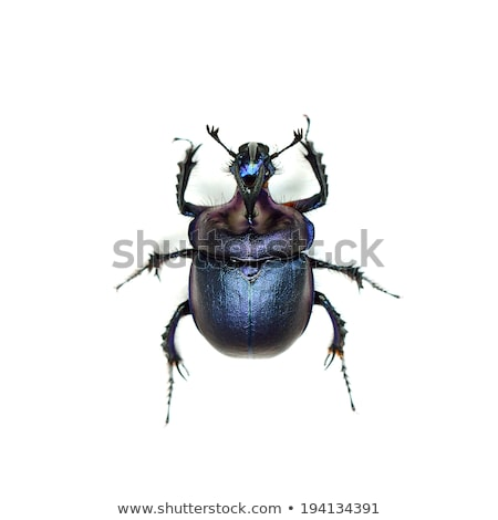 Besouro azul concha ilustração natureza fundo Foto stock © bluering