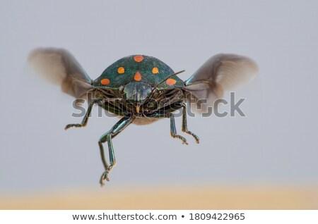 Besouro cinza asas ilustração feliz natureza Foto stock © bluering
