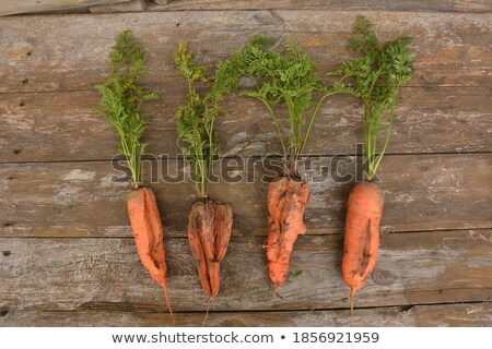 Rotten carrot on the ground Stock photo © bluering