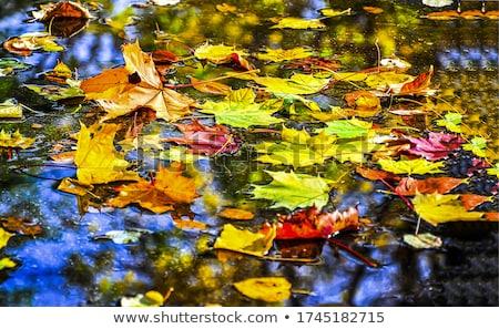 Stock photo: autumn puddle