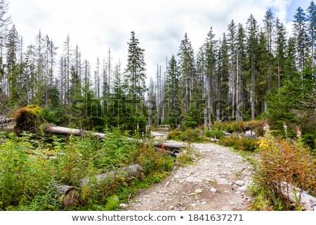 Najaar weg vallei gestileerde hemel natuur Stockfoto © tracer