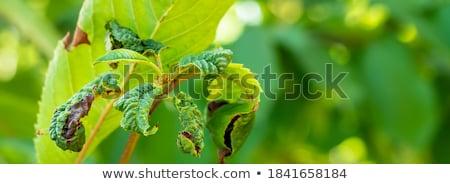 wyschnięcia · liści · charakter · ilustracja · zielone · jesienią - zdjęcia stock © bluering