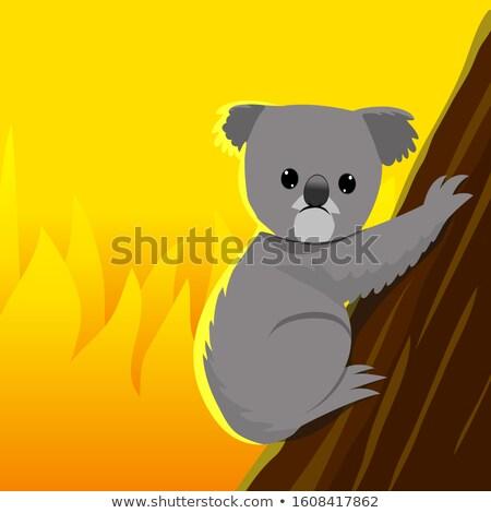 Scared Cartoon Kangaroo Stock photo © cthoman