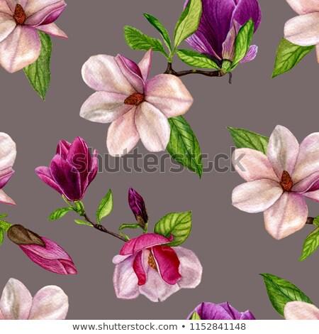 искусства акварель магнолия цветок цветок вектор Сток-фото © balasoiu