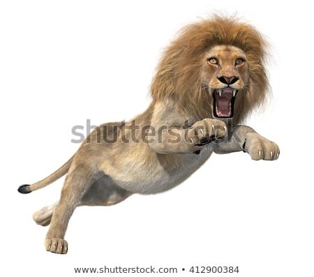 Lion illustration modernes vaches vecteur faune Photo stock © artisticco