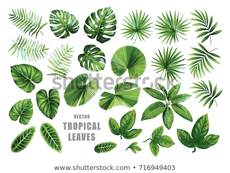 verde · tropicali · foglie · set · impianti · foglie · verdi - foto d'archivio © liolle