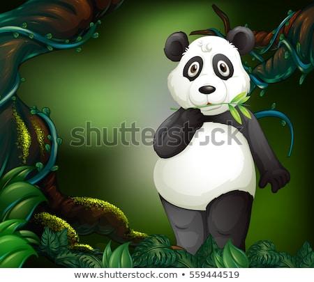 Panda pie profundo forestales ilustración árbol Foto stock © colematt