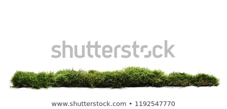 Green swamp plants background Stock photo © njnightsky