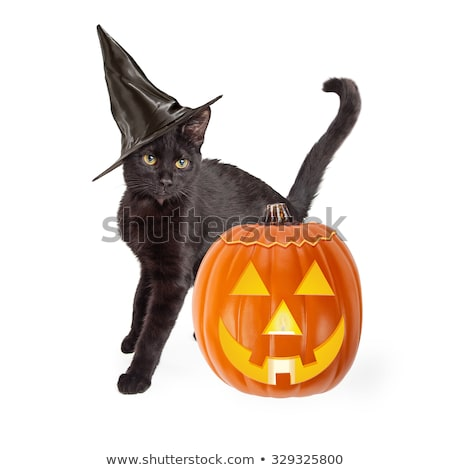 A black cat in a witch's hat next to a pumpkin on black background Stock photo © Natalia_1947