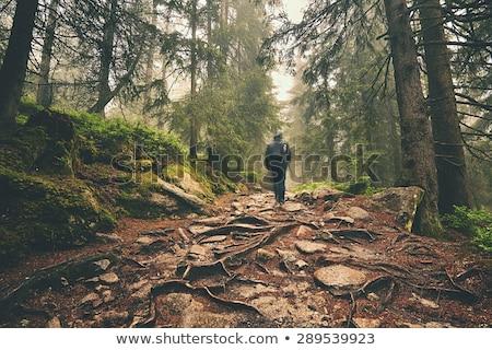 Traveler hiking through deep forest in the mountains Stock photo © lightpoet