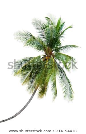 Nuovo cocco albero spiaggia tropicale mare Foto d'archivio © smithore