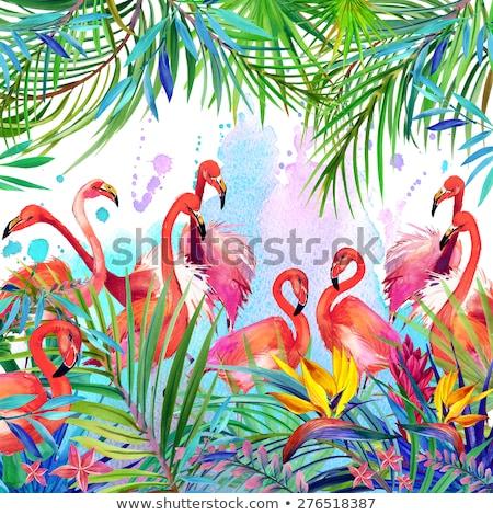 Kuşlar örnek tropikal çiçek çiçek seyahat tropikal Stok fotoğraf © Galyna