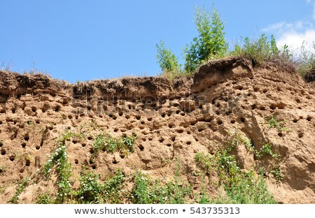 Holes dug by swallows in river bank Stock photo © pzaxe