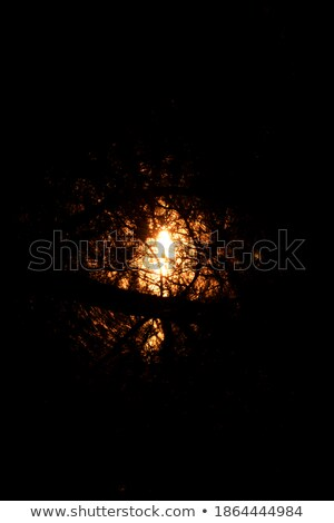 pine silhouettes against a wilderness sunset stock photo © wildnerdpix