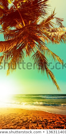 tropikalnej · plaży · pionowy · krajobraz · morza · dłoni · piasku - zdjęcia stock © moses