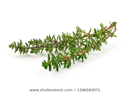 fresh green aromatc thyme herb macro Stock photo © juniart