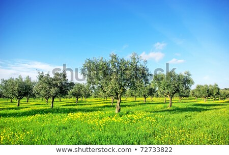 Flores campo região Portugal flor grama Foto stock © inaquim
