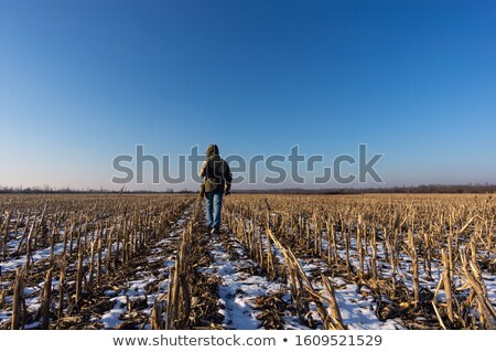 Mais veld stof land groene Stockfoto © hraska