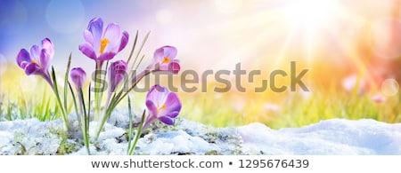 Snow melting on spring fields Stock photo © tainasohlman