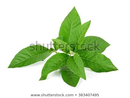 ストックフォト: 葉 · 白 · 自然 · 背景 · 緑