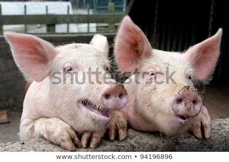 Sharing Farm Animals Stock photo © rghenry