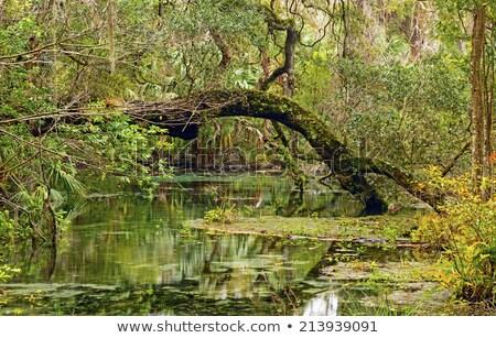 Mély dél szivárvány park Florida tájkép Stock fotó © wildnerdpix